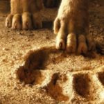 Le remake de The Lion King a déjà une date de sortie chez Disney +