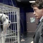 Robert Downey Jr. a fait Les Aventures du Docteur Dolittle parce qu'il aime les animaux