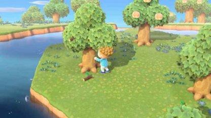 Secouez les arbres pour les faire tomber