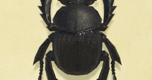 Animal Crossing New Horizons   Dung beetle – Comment capturer et prix   Interrupteur de passage d'animaux