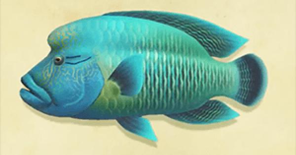 Animal Crossing New Horizons | Napoleonfish – Comment attraper et prix | Interrupteur de passage d'animaux