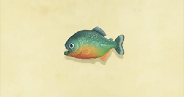 Animal Crossing New Horizons   Piranha – Comment capturer et prix   Interrupteur de passage d'animaux