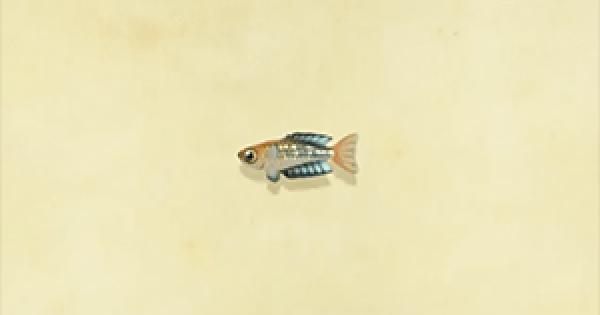 Animal Crossing New Horizons | Rainbowfish – Comment attraper et prix | Interrupteur de passage d'animaux