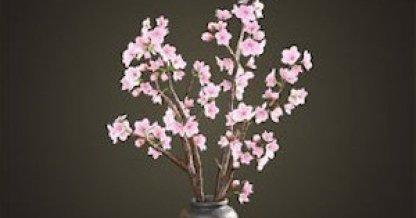 Articles Sakura