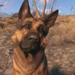 Fallout 76 présentera des animaux de compagnie à l'avenir avec une mise à jour