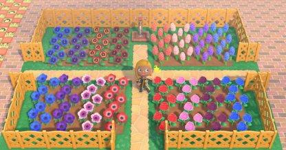 Parterre de fleurs