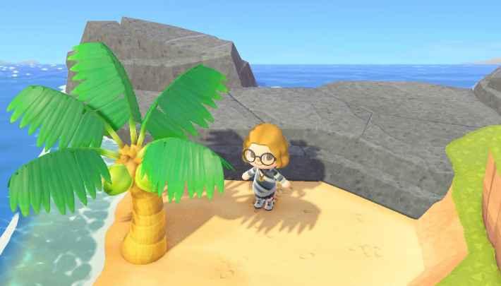 Planter un cocotier