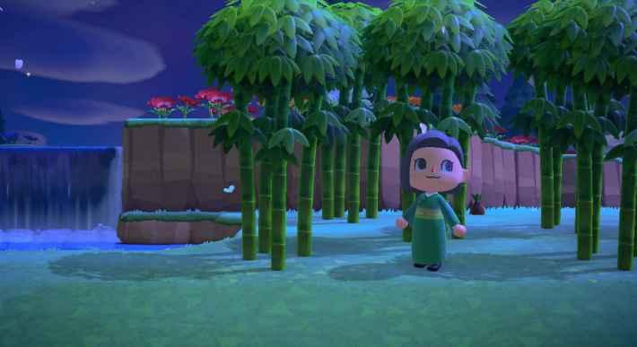 Bambou de printemps jeune