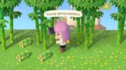 jeune bambou de printemps