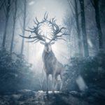 Shadow and Bone: Netflix présente ses premières images